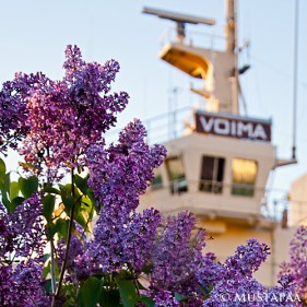 Icebreaker VOIMA and Syringa vulgaris. VOIMA is the Finnish word for force, forte, might, potency, power, sinew, stream, strength and vigor.