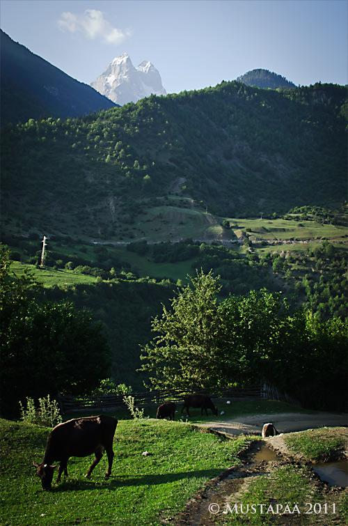 A view to Ushba