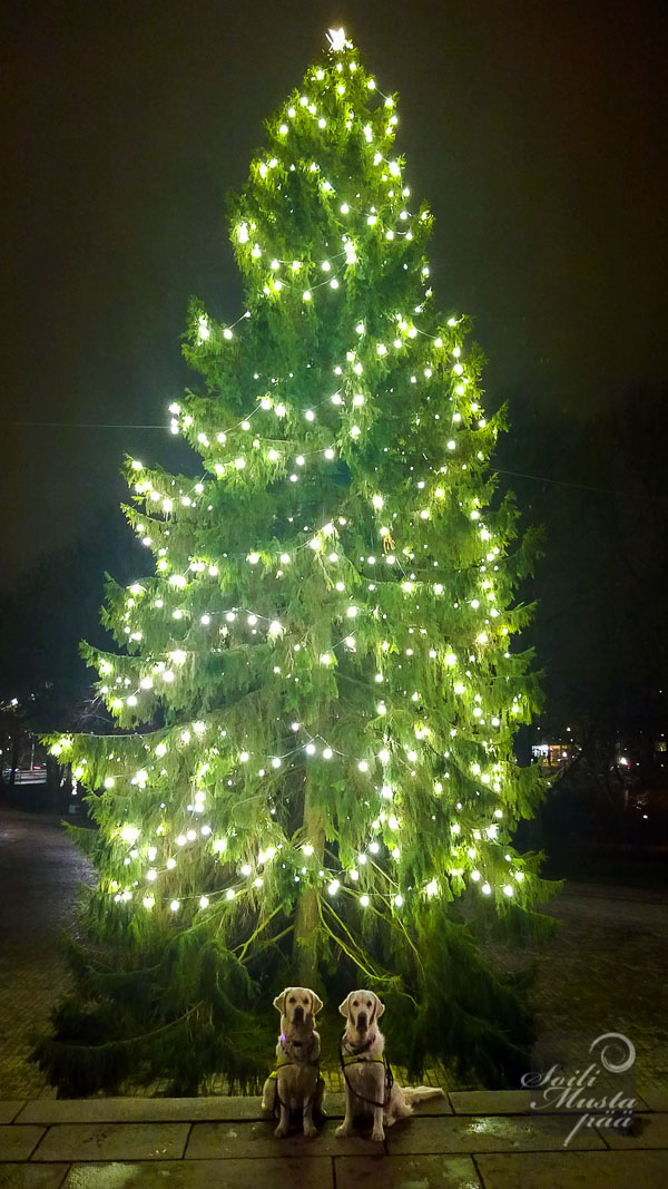christmastree_turku_2014_soili mustapää