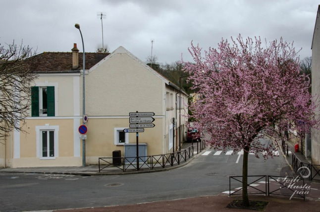 fontainebleau_streetview